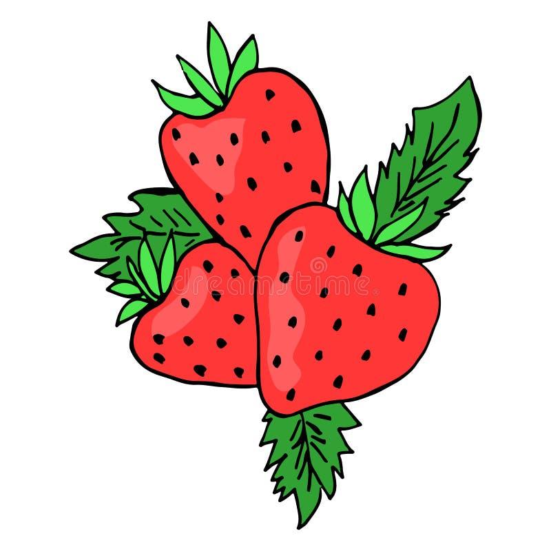 Φράουλα τρία που χρωματίζεται σκίτσο απομονωμένη διάνυσμα εικόνα στοκ εικόνες