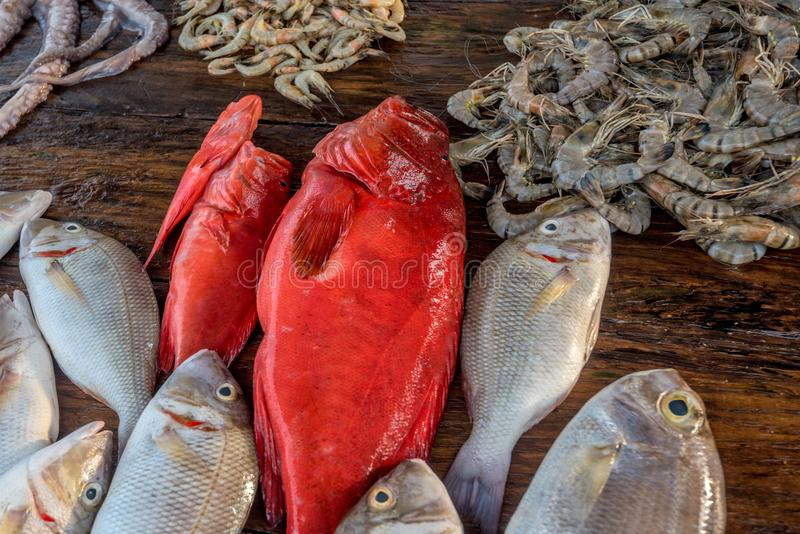Φρέσκα ακατέργαστα ψάρια και θαλασσινά στην αγορά στοκ εικόνες