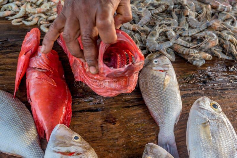Φρέσκα ακατέργαστα ψάρια και θαλασσινά στην αγορά στοκ εικόνα με δικαίωμα ελεύθερης χρήσης