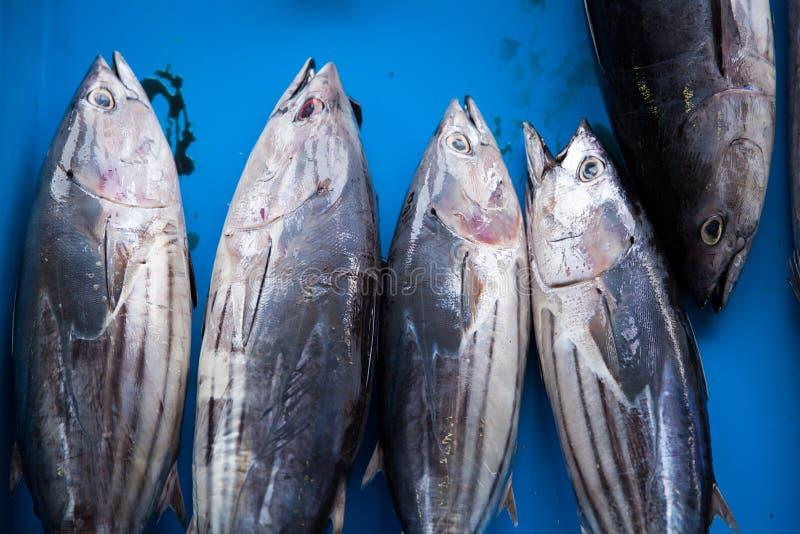 Φρέσκα ακατέργαστα ψάρια τόνου στην αγορά στοκ φωτογραφίες