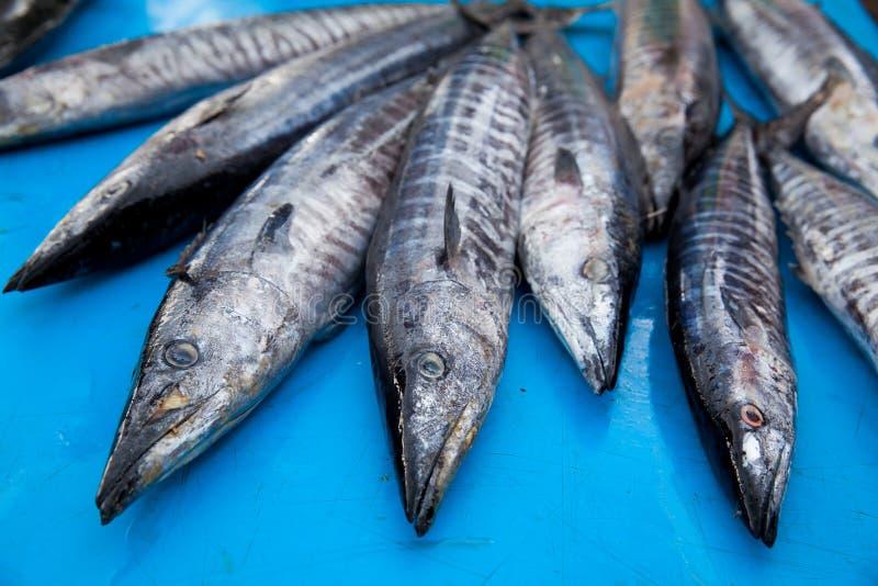 Φρέσκα ακατέργαστα ψάρια barracuda στην αγορά στοκ εικόνα με δικαίωμα ελεύθερης χρήσης