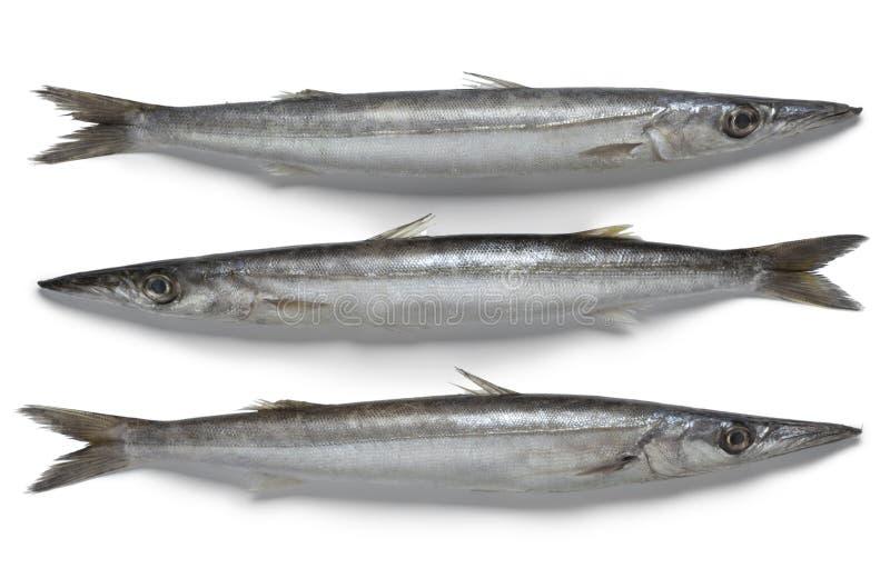 Φρέσκα ακατέργαστα ψάρια barracuda στοκ φωτογραφίες