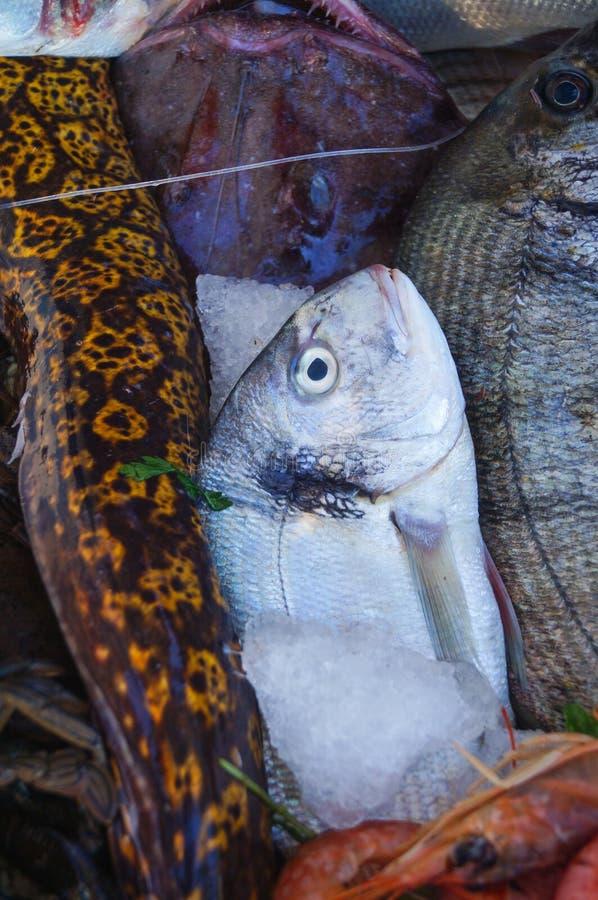 Φρέσκα ακατέργαστα ψάρια dorado με άλλα θαλάσσια ψάρια στοκ εικόνα με δικαίωμα ελεύθερης χρήσης