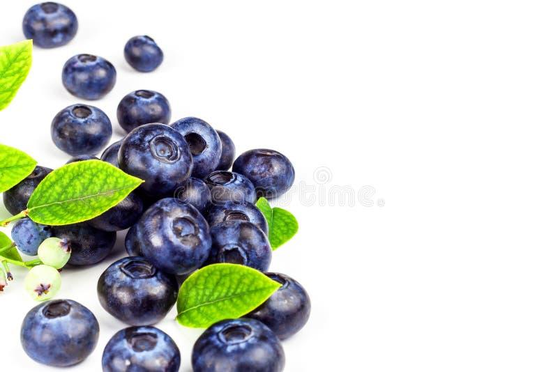 Φρέσκα βακκίνια σε ένα άσπρο υπόβαθρο Υγιή θερινά φρούτα Γούστο του καλοκαιριού Ανάπτυξη των βακκινίων Διαφήμιση στα βακκίνια στοκ εικόνες