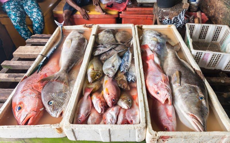 Φρέσκα θαλασσινά θαλασσινών στοκ εικόνες