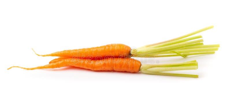 Φρέσκα καρότα μωρών που απομονώνονται σε ένα άσπρο υπόβαθρο στοκ εικόνες με δικαίωμα ελεύθερης χρήσης