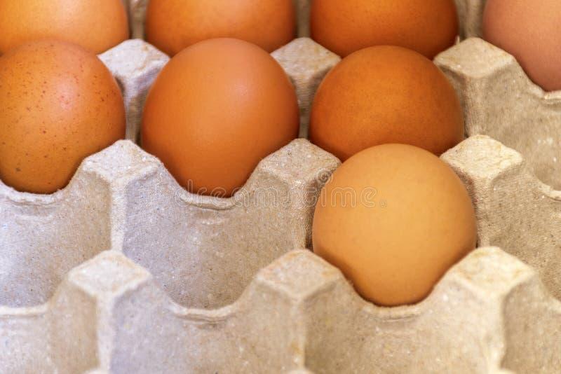 Φρέσκα καφετιά αυγά πουλερικών στο δίσκο εγγράφου Φρέσκα αυγά από το αγρόκτημα στοκ εικόνα με δικαίωμα ελεύθερης χρήσης