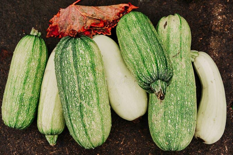 Φρέσκα λαχανικά, κολοκύνθη στοκ εικόνες