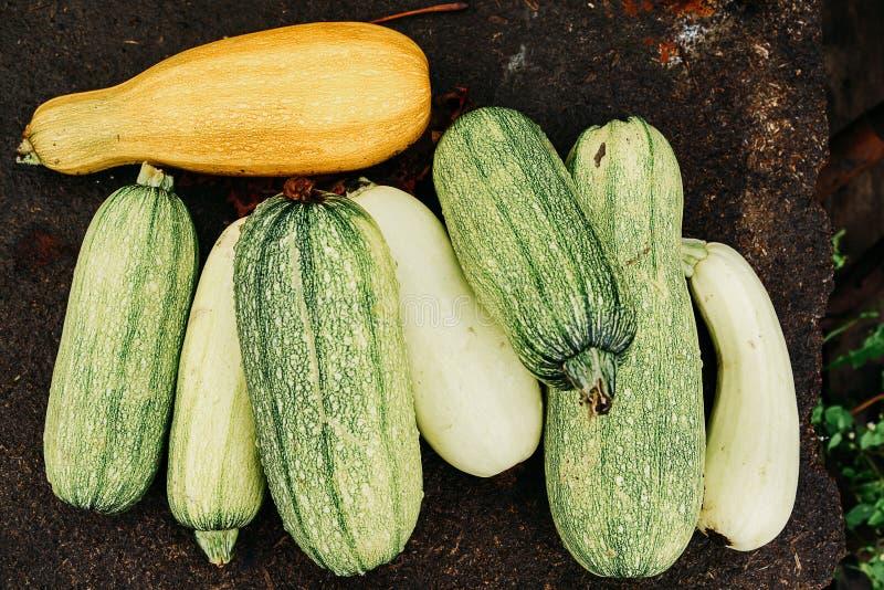 Φρέσκα λαχανικά, κολοκύνθη στοκ φωτογραφία