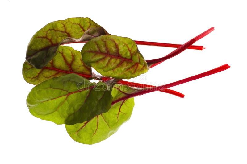 φρέσκα λαχανικά σπανακιο στοκ φωτογραφίες με δικαίωμα ελεύθερης χρήσης