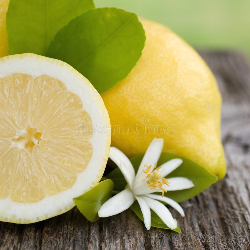 Φρέσκα λεμόνια στοκ εικόνα