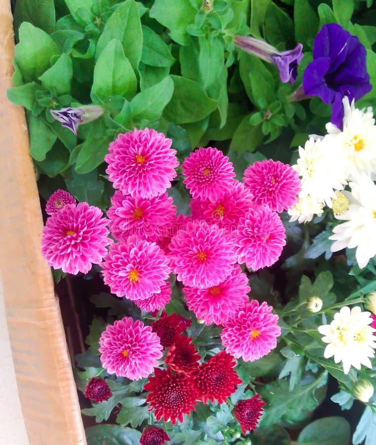 Φρέσκα λουλούδια κήπων από τον κήπο στοκ φωτογραφία