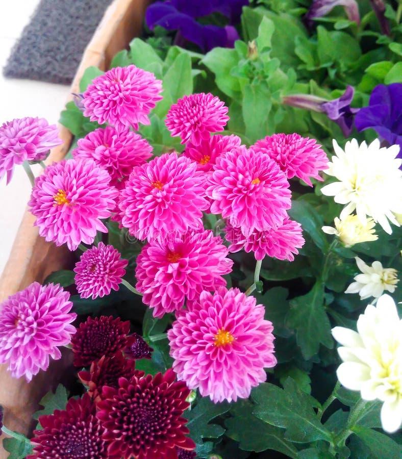 Φρέσκα λουλούδια κήπων από τον κήπο στοκ φωτογραφίες