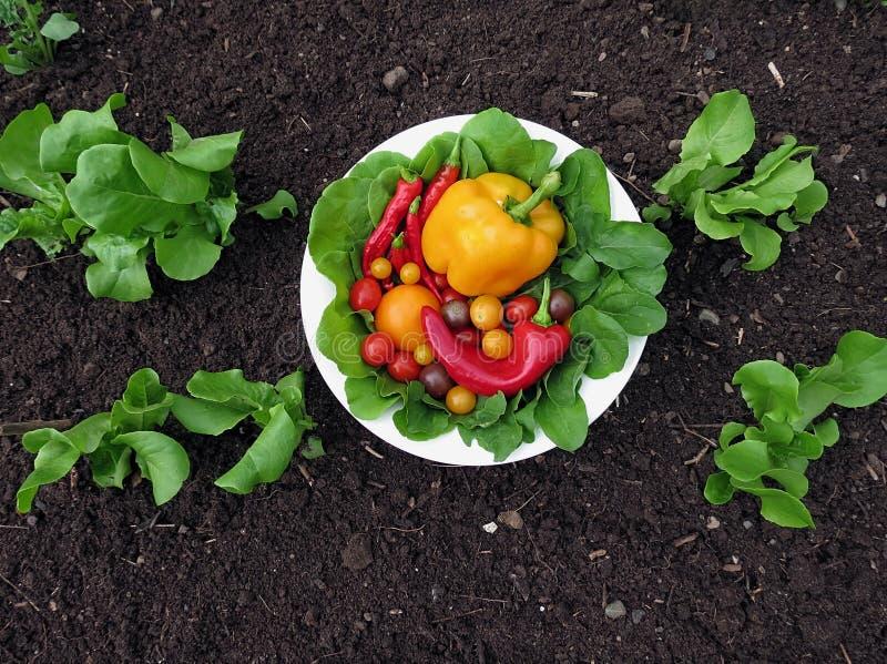 Φρέσκα οργανικά λαχανικά κήπων στοκ εικόνες