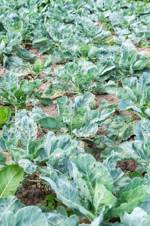 Φρέσκα οργανικά λαχανικά από τον κήπο στοκ εικόνες