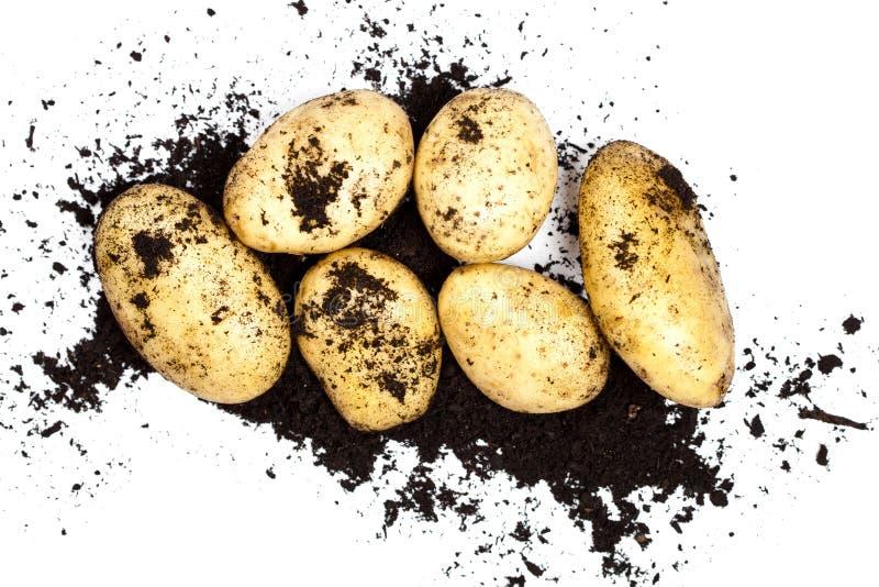Φρέσκα οργανικά πατάτες και χώμα που απομονώνονται στο άσπρο υπόβαθρο στοκ εικόνες με δικαίωμα ελεύθερης χρήσης