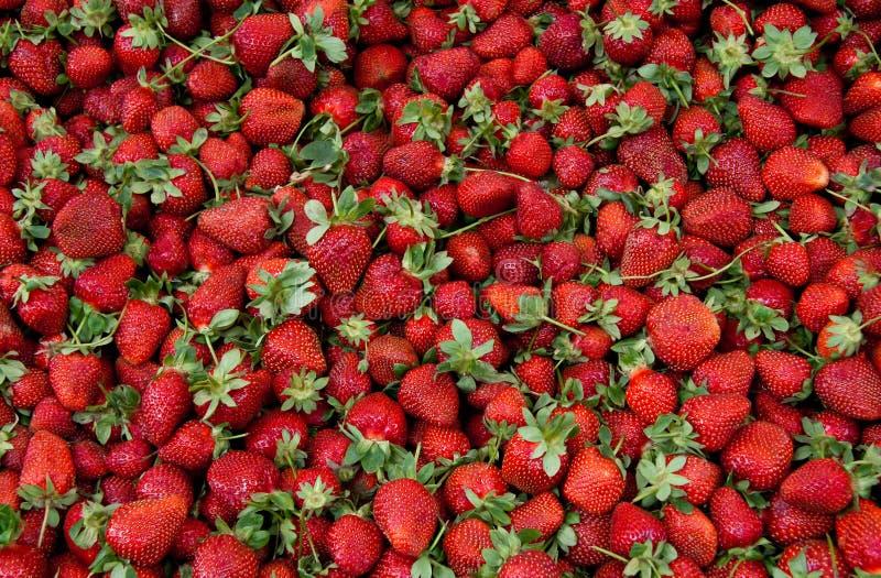 φρέσκα οργανικά ώριμα strawberrys στοκ φωτογραφία με δικαίωμα ελεύθερης χρήσης