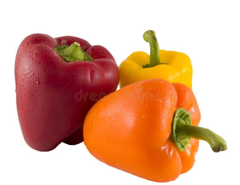 φρέσκα πιπέρια κουδουνιώ&n στοκ φωτογραφία