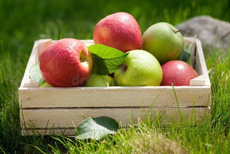 Φρέσκα πράσινα και κόκκινα μήλα κήπων στο κιβώτιο στοκ εικόνα με δικαίωμα ελεύθερης χρήσης