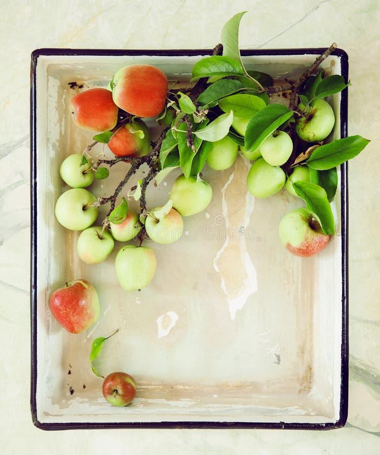 Φρέσκα πράσινα και κόκκινα μήλα σε έναν κλάδο σε ένα shabby κομψό πιάτο στοκ εικόνες