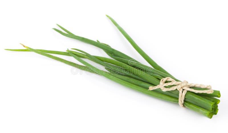 Φρέσκα πράσινα κρεμμύδια στοκ εικόνες με δικαίωμα ελεύθερης χρήσης