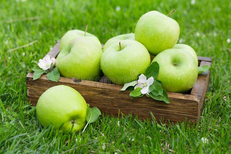 Φρέσκα πράσινα μήλα κήπων στο κιβώτιο στοκ εικόνα με δικαίωμα ελεύθερης χρήσης