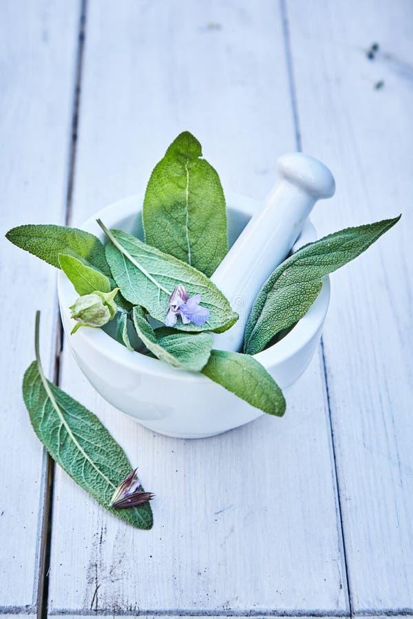 Φρέσκα πράσινα φύλλα salvia σε ένα κονίαμα στοκ εικόνα με δικαίωμα ελεύθερης χρήσης