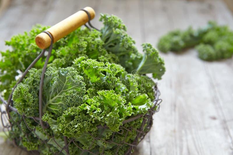Φρέσκα πράσινα φύλλα κατσαρού λάχανου στοκ εικόνα με δικαίωμα ελεύθερης χρήσης