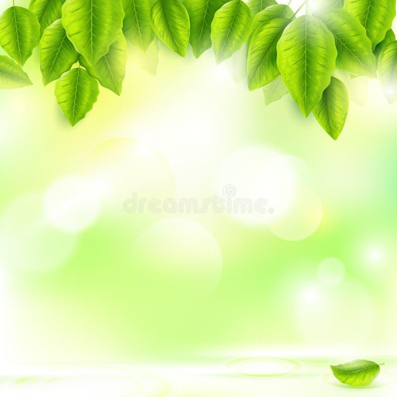 Φρέσκα πράσινα φύλλα με το ηλιόλουστο αφηρημένο φυσικό υπόβαθρο απεικόνιση αποθεμάτων