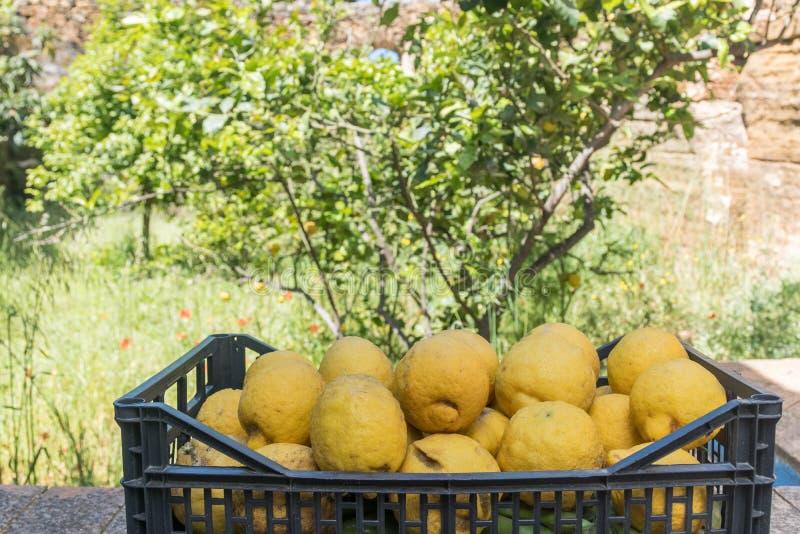 Φρέσκα σισιλιάνα λεμόνια σε ένα κιβώτιο στοκ εικόνες