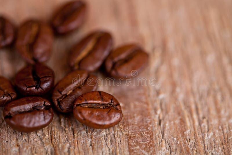 Φρέσκα φασόλια καφέ στοκ εικόνα