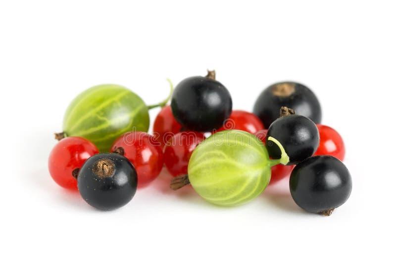 Φρέσκα φρούτα μούρων στοκ εικόνες