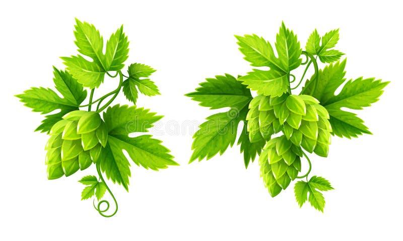 Φρέσκα φυτά λυκίσκου με το πράσινο διάνυσμα φύλλων απεικόνιση αποθεμάτων