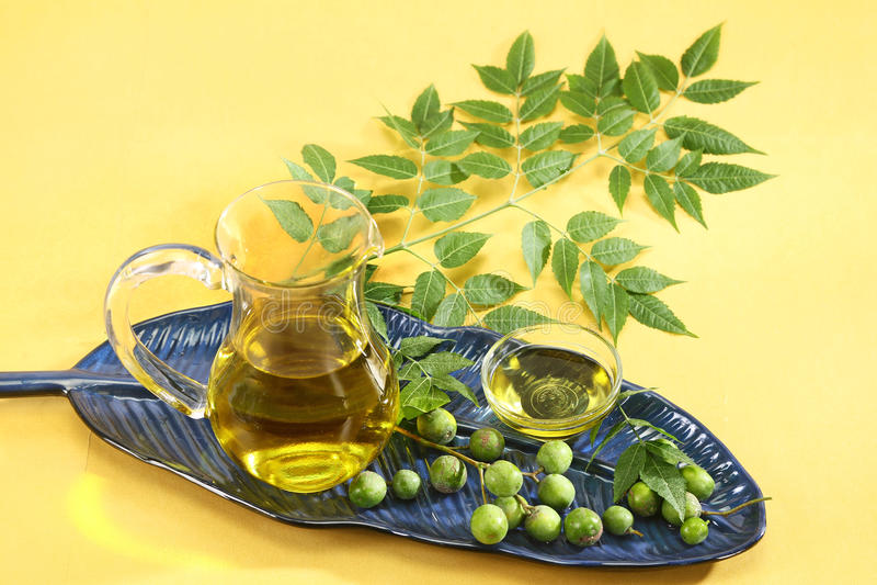 Φρέσκα φύλλα Neem με το πετρέλαιο στοκ εικόνες