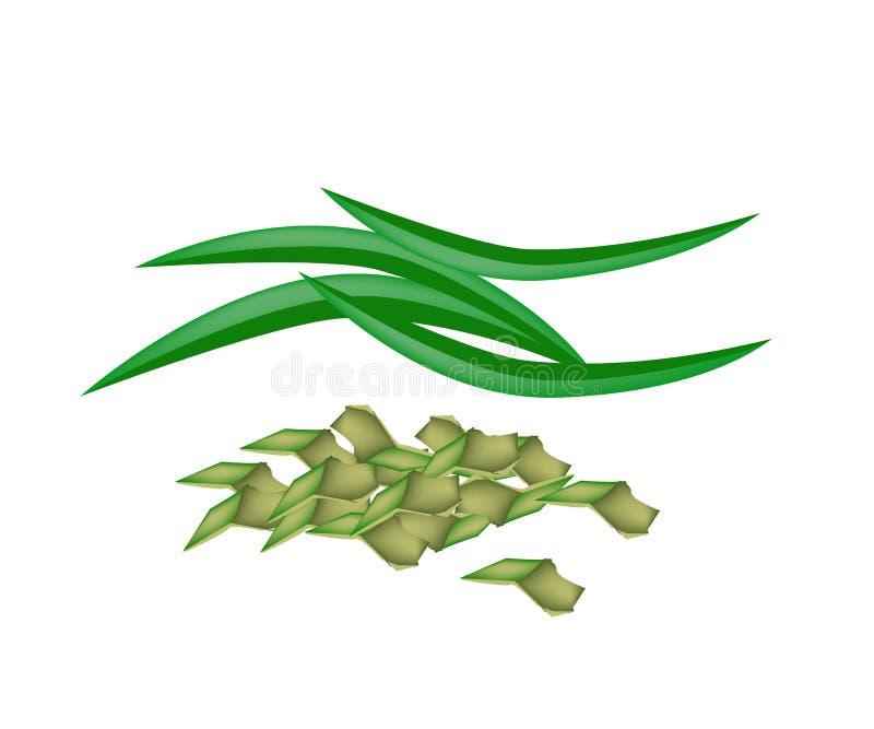 Φρέσκα φύλλα Pandan σε ένα άσπρο υπόβαθρο ελεύθερη απεικόνιση δικαιώματος