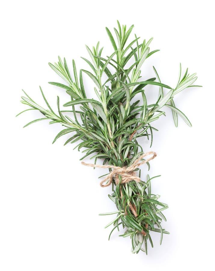 φρέσκα χορτάρια κήπων Rosemary στοκ εικόνα με δικαίωμα ελεύθερης χρήσης