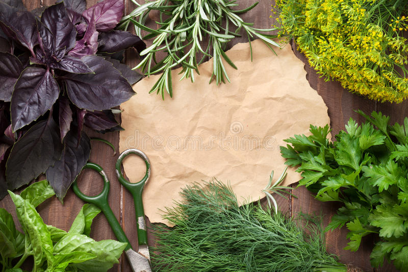 Φρέσκα χορτάρια και κομμάτι χαρτί κήπων στοκ εικόνες