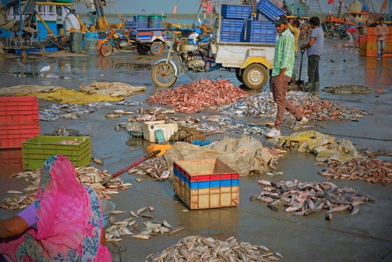 Φρέσκα ψάρια για την πώληση σε μια αποβάθρα Gujarati στοκ φωτογραφία με δικαίωμα ελεύθερης χρήσης