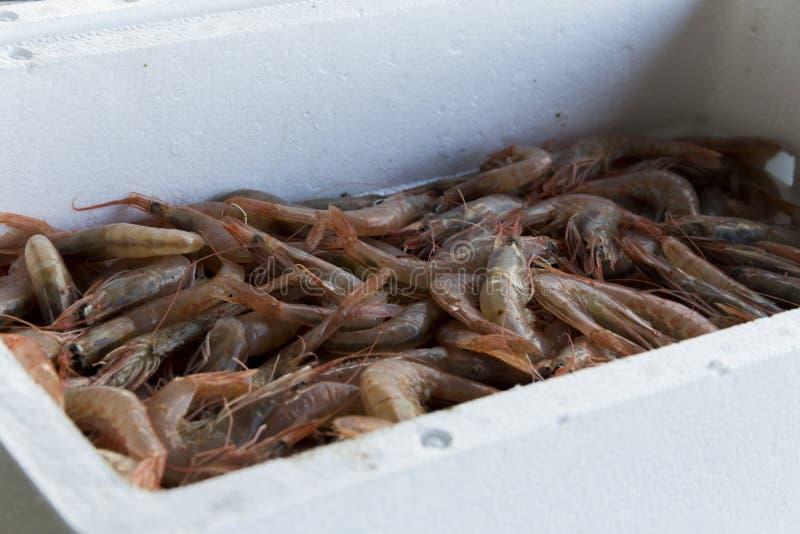 Φρέσκα ψάρια και οστρακόδερμα Cambrils στο λιμάνι, Tarragona, Ισπανία στοκ φωτογραφίες
