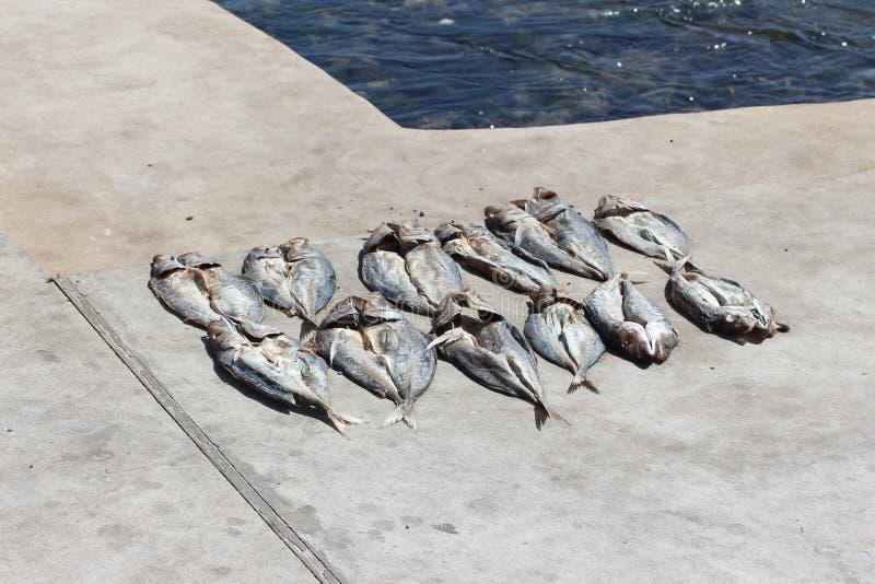 Φρέσκα ψάρια που ξεραίνουν στον ήλιο στοκ φωτογραφίες