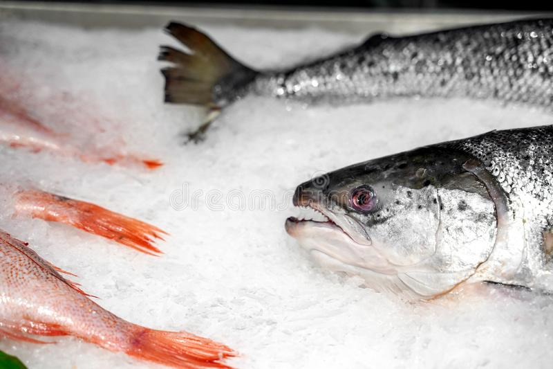 Φρέσκα ψάρια σκουμπριών στον πάγο στοκ φωτογραφία