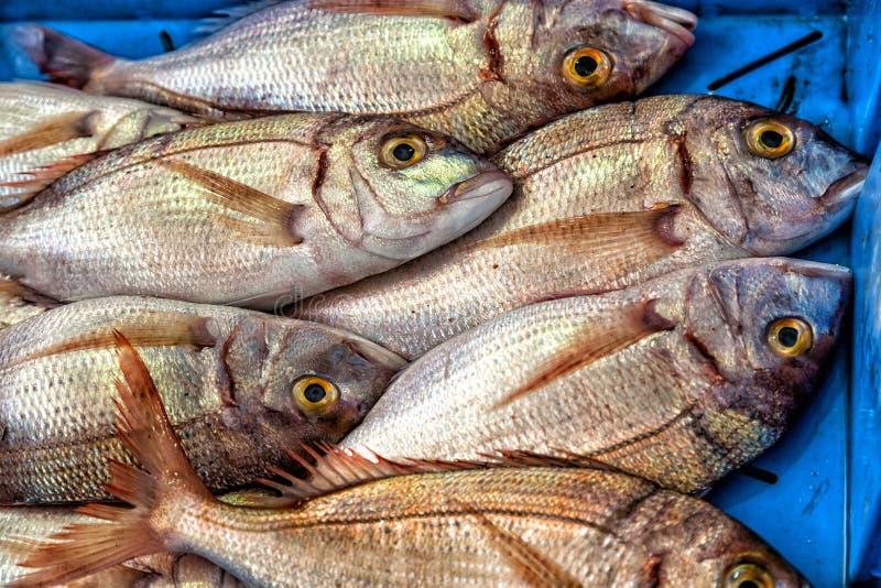 Φρέσκα ψάρια στην αγορά στοκ εικόνες