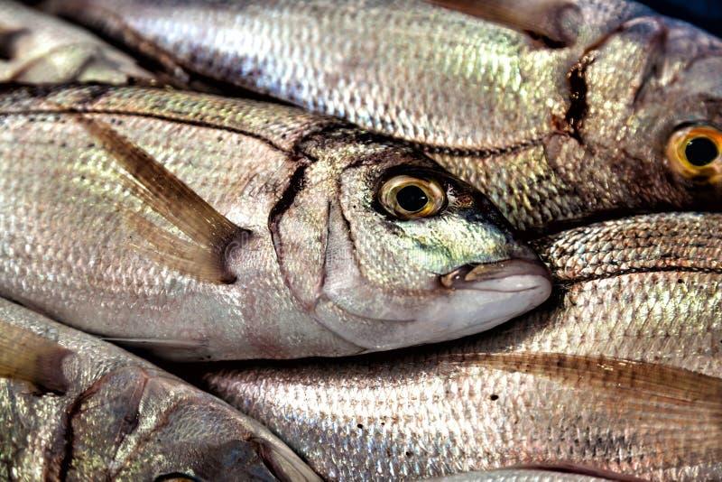 Φρέσκα ψάρια στην αγορά στοκ εικόνα