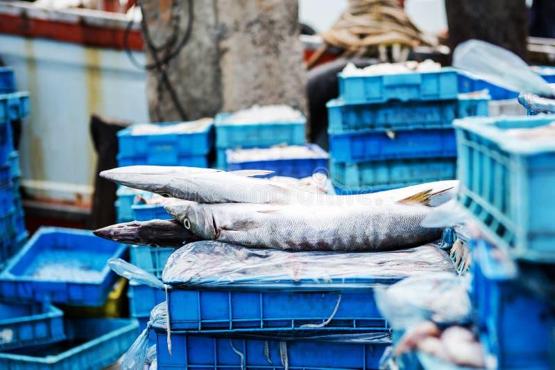 Φρέσκα ψάρια στην αποβάθρα έτοιμη στην αγορά Barracuda, Seapike στοκ φωτογραφία