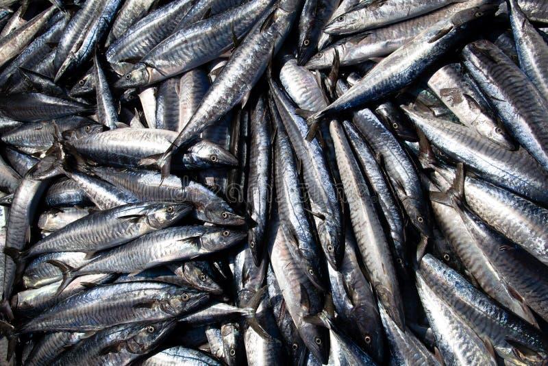 Φρέσκα ψάρια στη βάρκα στοκ εικόνες