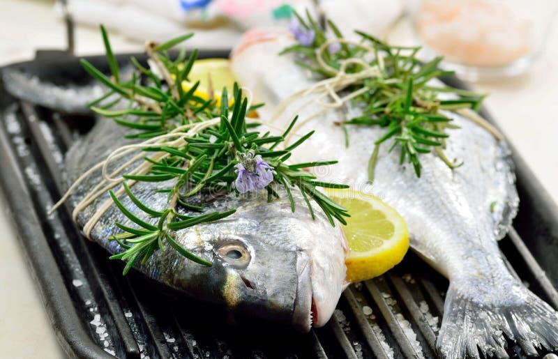 Φρέσκα ψάρια στοκ εικόνα