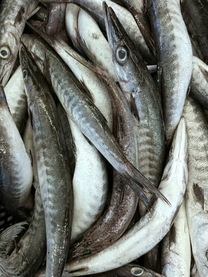 Φρέσκα ψάρια barracuda στην αγορά στοκ φωτογραφία με δικαίωμα ελεύθερης χρήσης