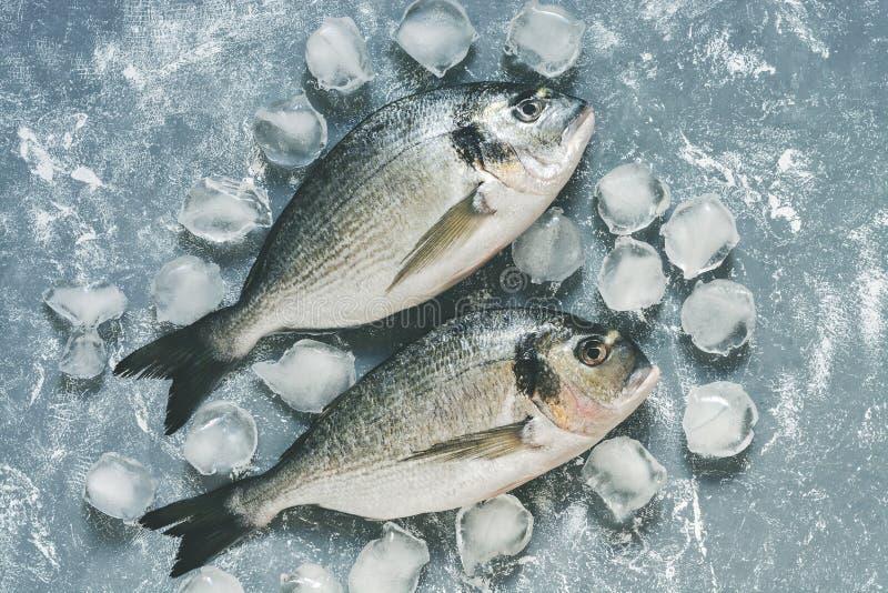 Φρέσκα ψάρια dorado με τους κύβους πάγου στο γκρίζο αγροτικό υπόβαθρο Η τοπ άποψη, επίπεδη βάζει στοκ εικόνα