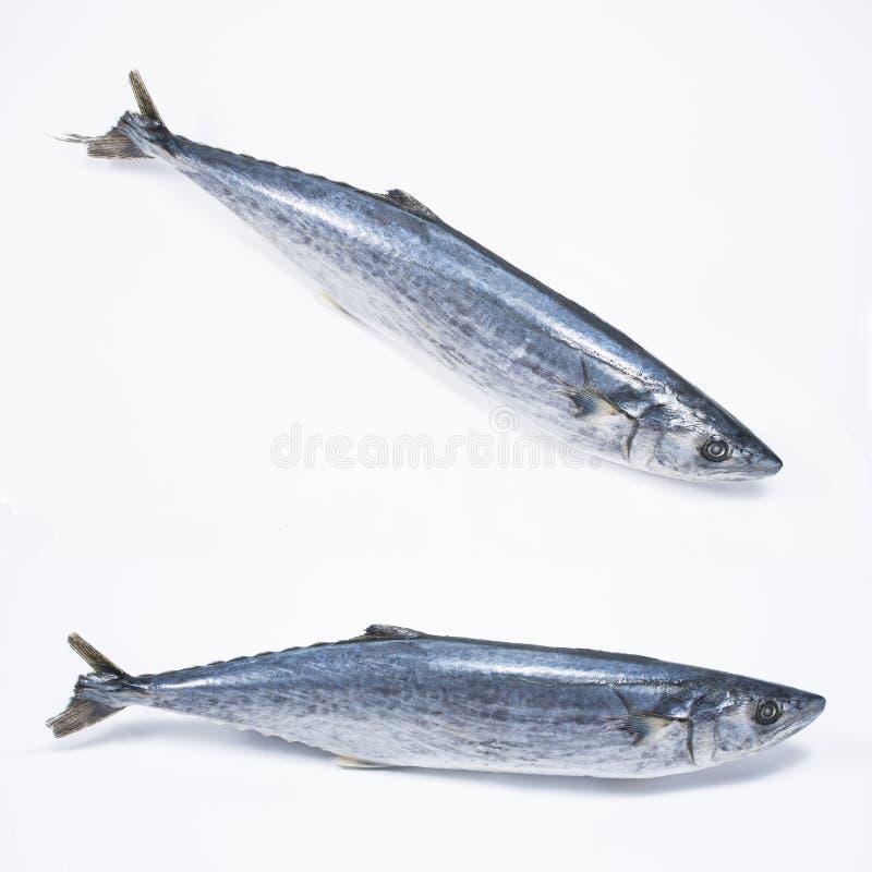 Φρέσκα ψάρια Tenggiri στοκ φωτογραφία με δικαίωμα ελεύθερης χρήσης