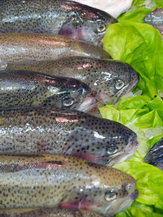 Download φρέσκα salmons στοκ εικόνες. εικόνα από φρέσκος, παγωμένος - 1538050